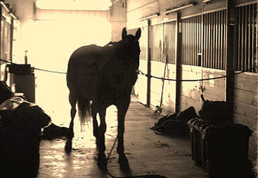 View of Horse in Barn